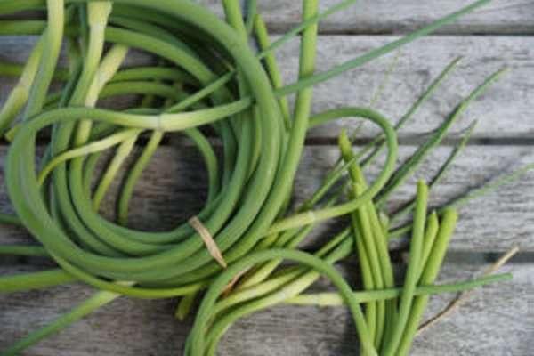 Зеленый чеснок: польза и вред, приготовление