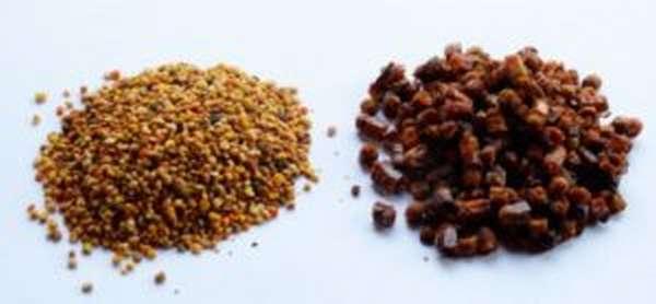 Перга: польза и вред, лечебные свойства, применение