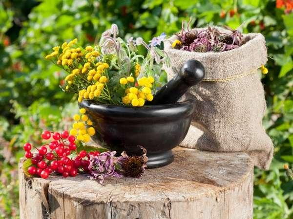 Травы от импотенции для мужчин: лечение импотенции фитотерапией