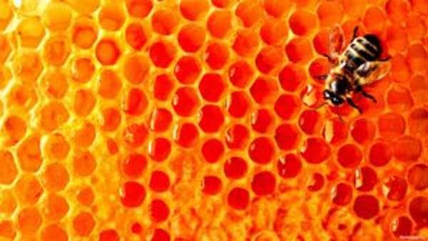 Мёд в сотах: как хранить и есть? Можно ли глотать воск?