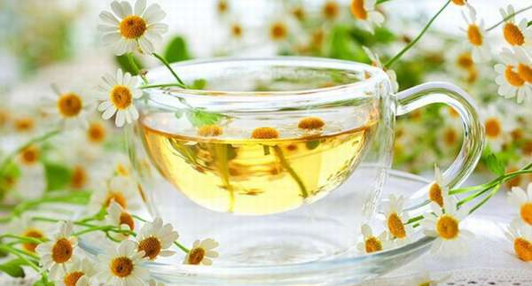 Чай из ромашки: полезные свойства и противопоказания