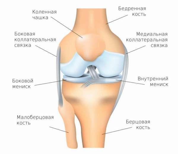 Мыщелки коленного сустава фото