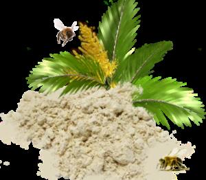 Пальмовая пыльца: полезные свойства и противопоказания