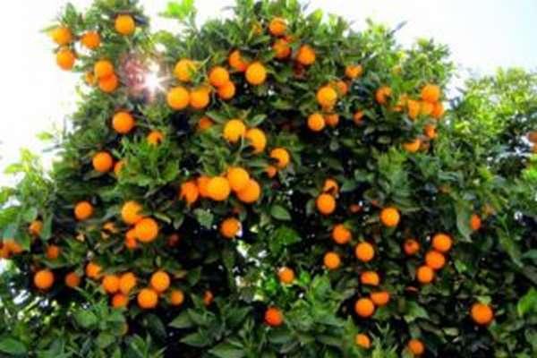 Сок грейпфрута: польза и вред