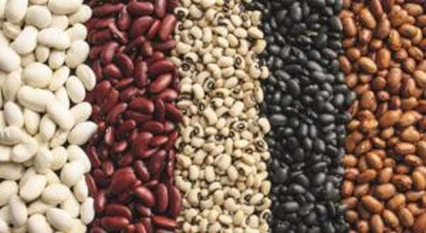 Чем полезна фасоль, свойства и противопоказания