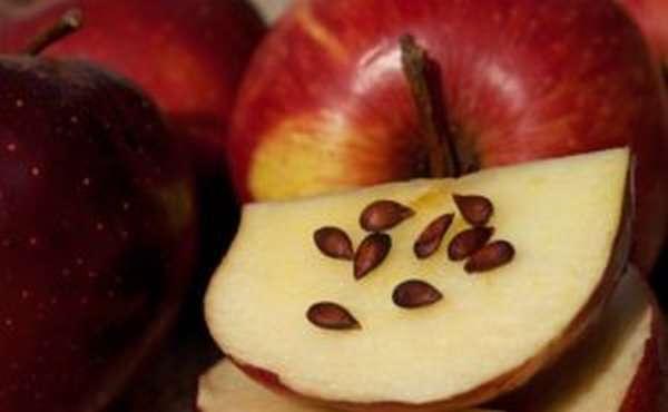Что содержится в яблочных косточках