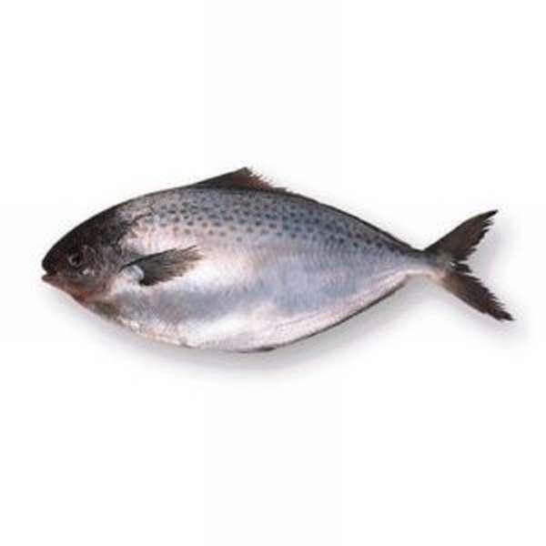 Чем полезна масляная рыба, описание, виды и приготовление