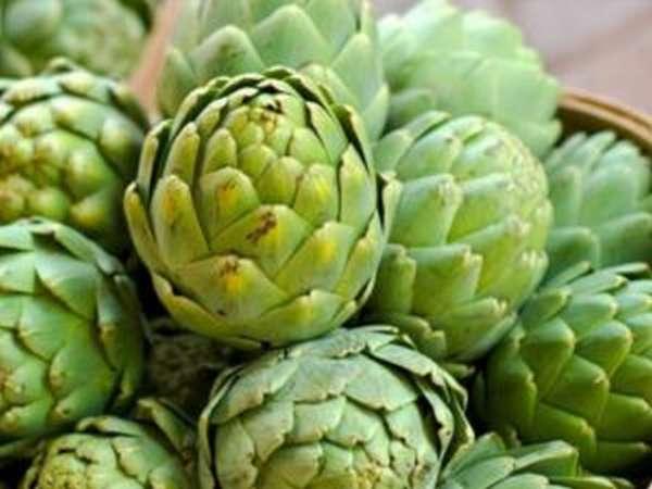 Артишок- история овоща и его свойства