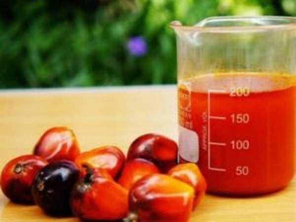 Чем вредно пальмовое масло, фото и отзывы
