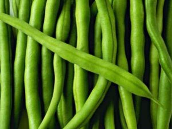 Чем полезна стручковая фасоль, диетические рецепты