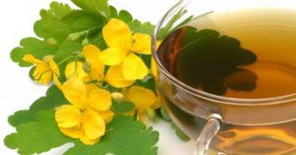 Чистотел: польза и вред, лечебные рецепты, инструкция