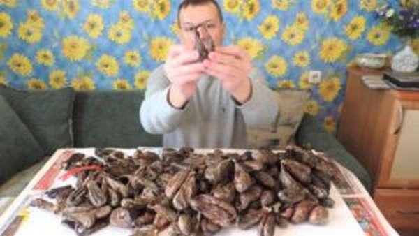 Польза и вред бобровой струи
