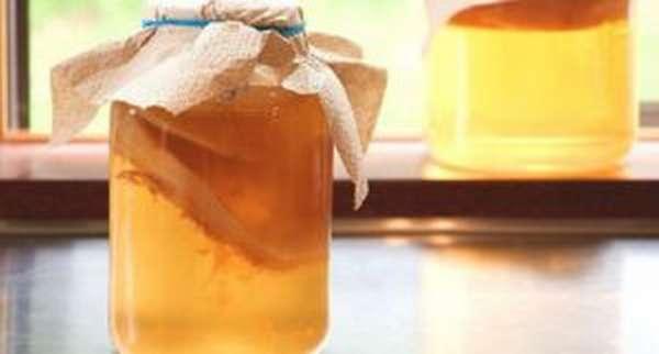 Польза и вред чайного гриба, как вырастить его в домашних условиях