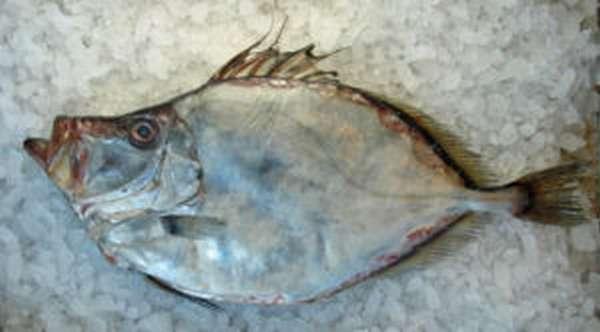 Польза рыбы дори