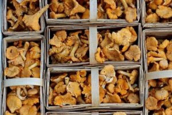 Чем полезны лисички и как их вкусно приготовить