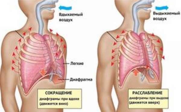 Дыхание животом: польза и вред, техника, отзывы