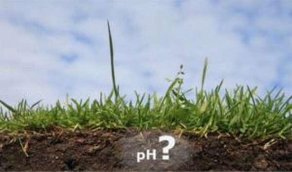 Гуминовые кислоты: влияние на организм человека, свойства и применение