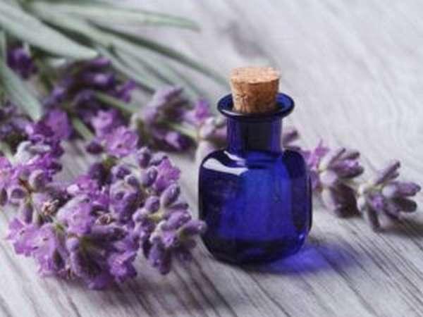 Свойства и применение лавандового масла