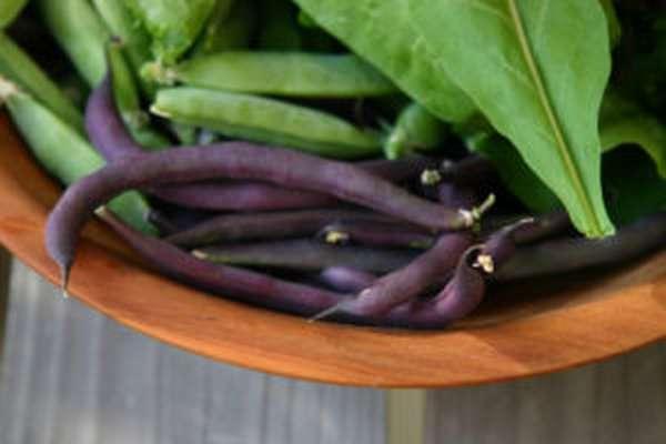 Черная фасоль: полезные свойства, как варить