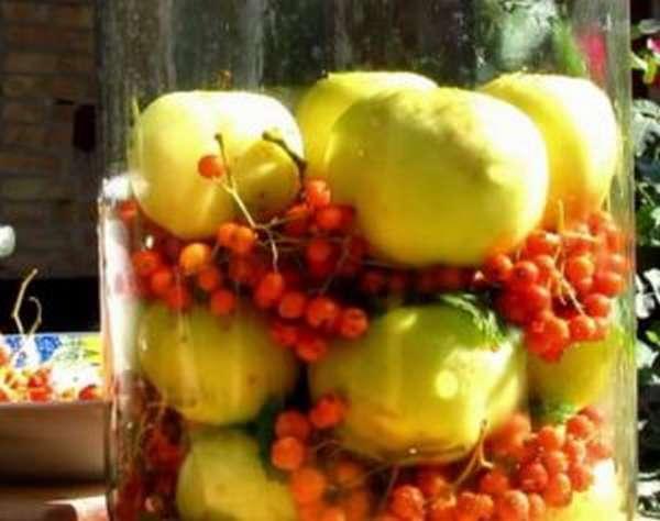 Чем полезны моченые яблоки, как приготовить их на зиму