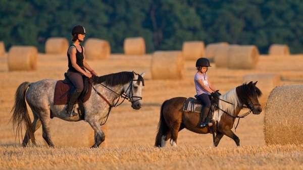 Польза и вред конного спорта, отзывы