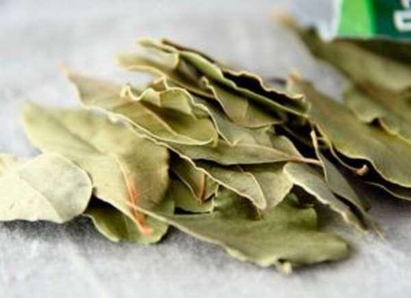Полезные свойства и применение лаврового листа в народной медицине